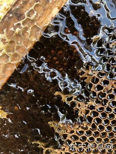 庙岭椴树蜜,蜂王浆质量有保证,纯绿色无污染,零售,批发